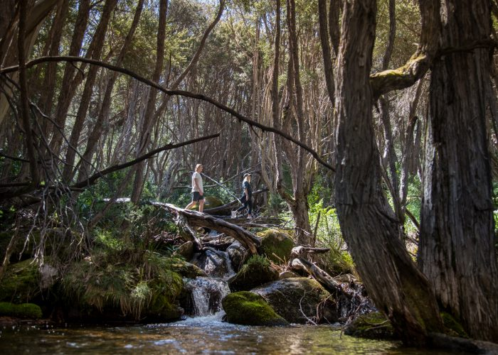 hiking nature track