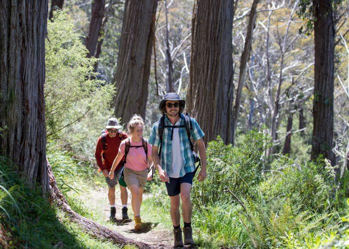 Bush walking meritts nature track